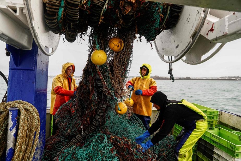 Les eaux britanniques, plus profondes, plus froides et plus oxygénées, sont plus riches en coquilles Saint-Jacques, qui représentent une importante source de revenus pour les pêcheurs français.