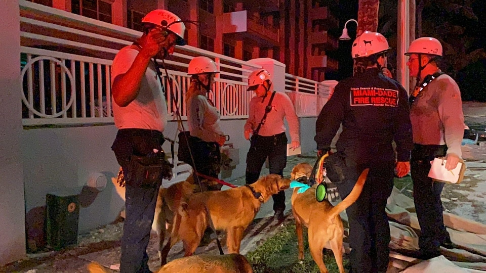 Rescue dogs and their handlers prepare for the search.