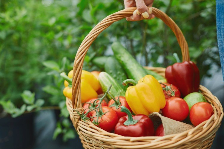 Hot flashes reduce frequency of a vegan, fat-free diet enriched with new soybean study